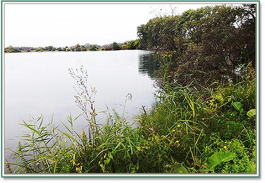 фото озеро с белым амуром